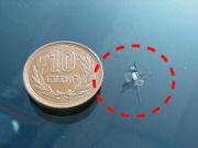10円玉で隠れる程度のヒビ割れはウィンドリペアで 安価に修理出来ます